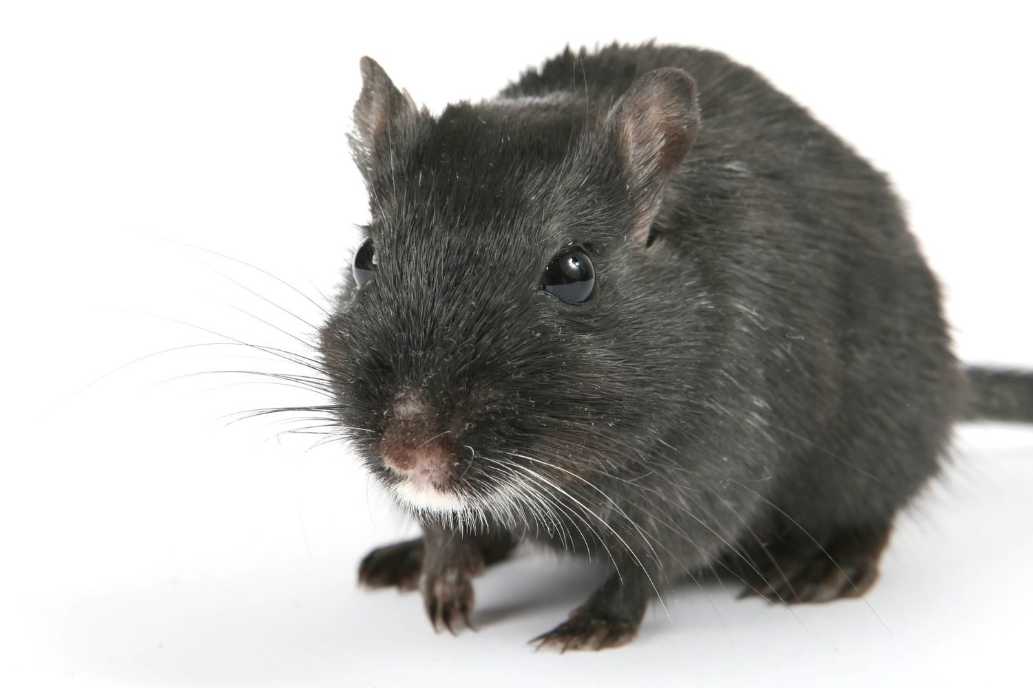 7 Tips To Keep Rodents Out Of Your House