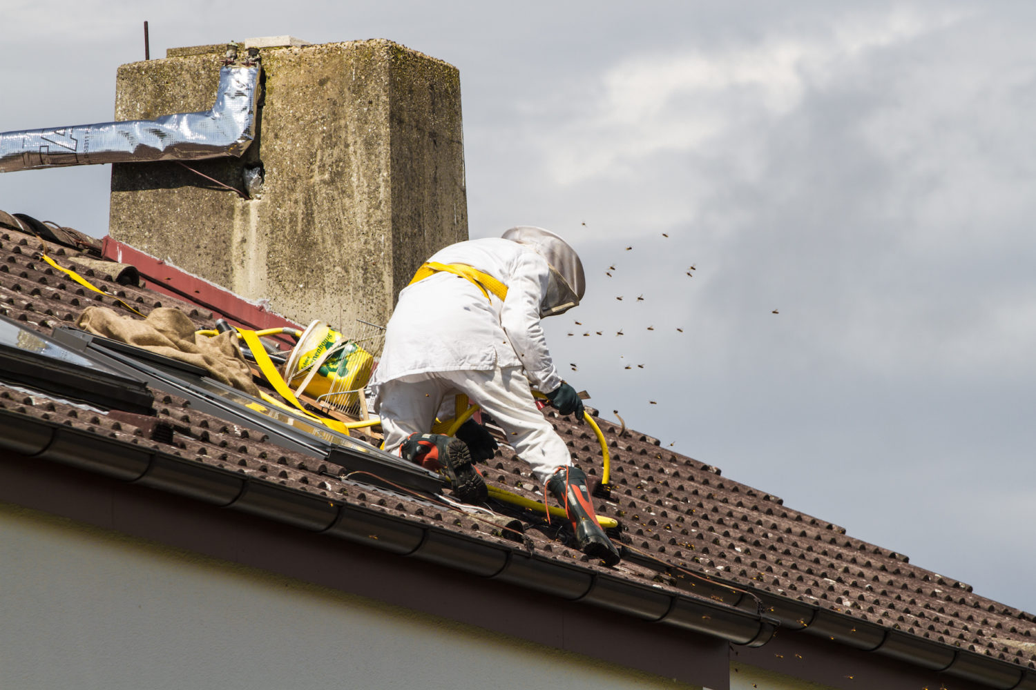 Few Reasons To Avoid DIY Bee Removal