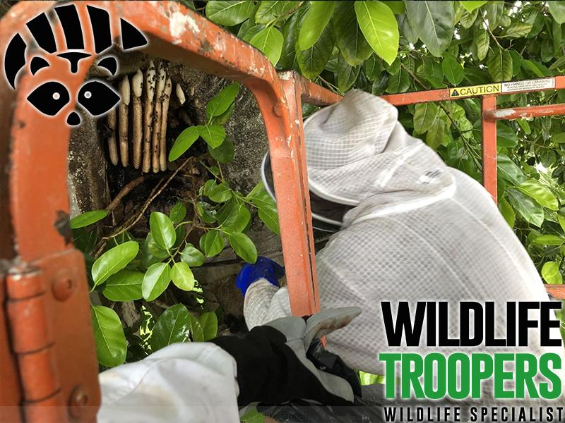 Wildlife Troopers   Wildlife Specialist