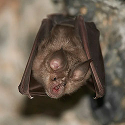 Bat Removal Professional Services