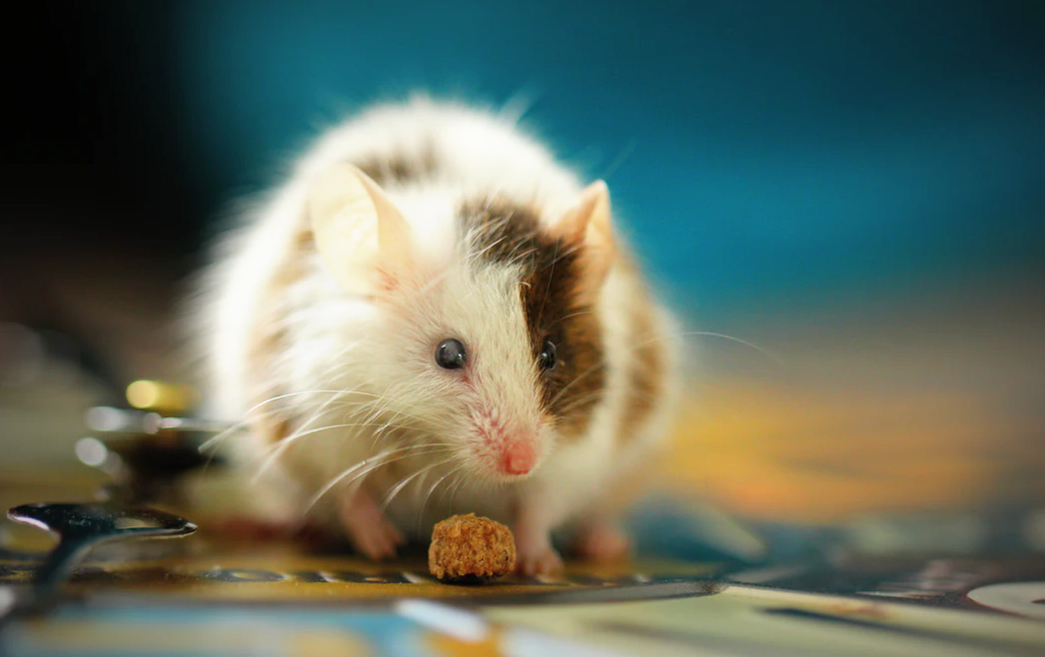 Professional Mice Extermination and Removal Service