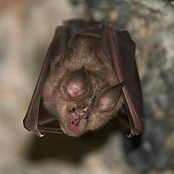 bats-img2
