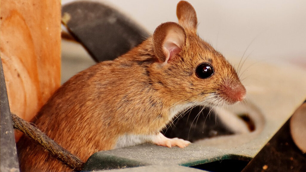 mouse-img