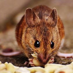 mouse-img1