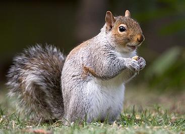 Effective Squirrel Removal Service