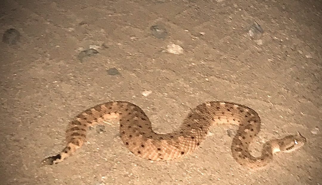 Do Snakes Come Out At Night In Florida?