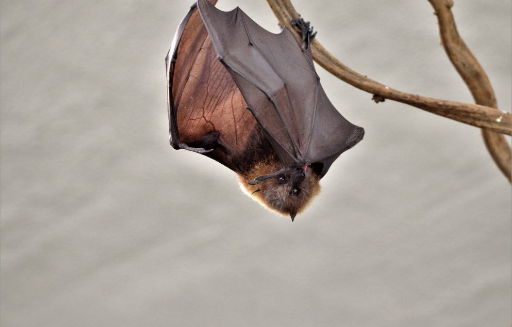 Can Bats Nest In Your Eaves And Gutters?