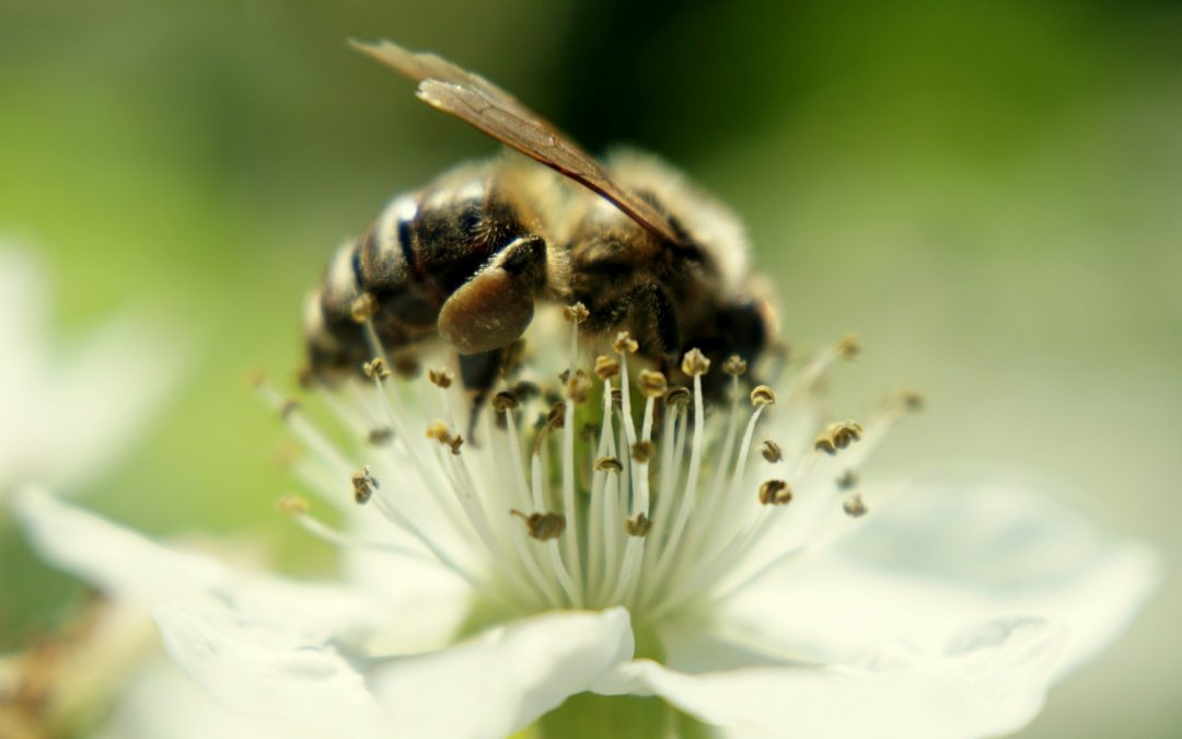 Where Do Bees Go In The Winter In Florida?