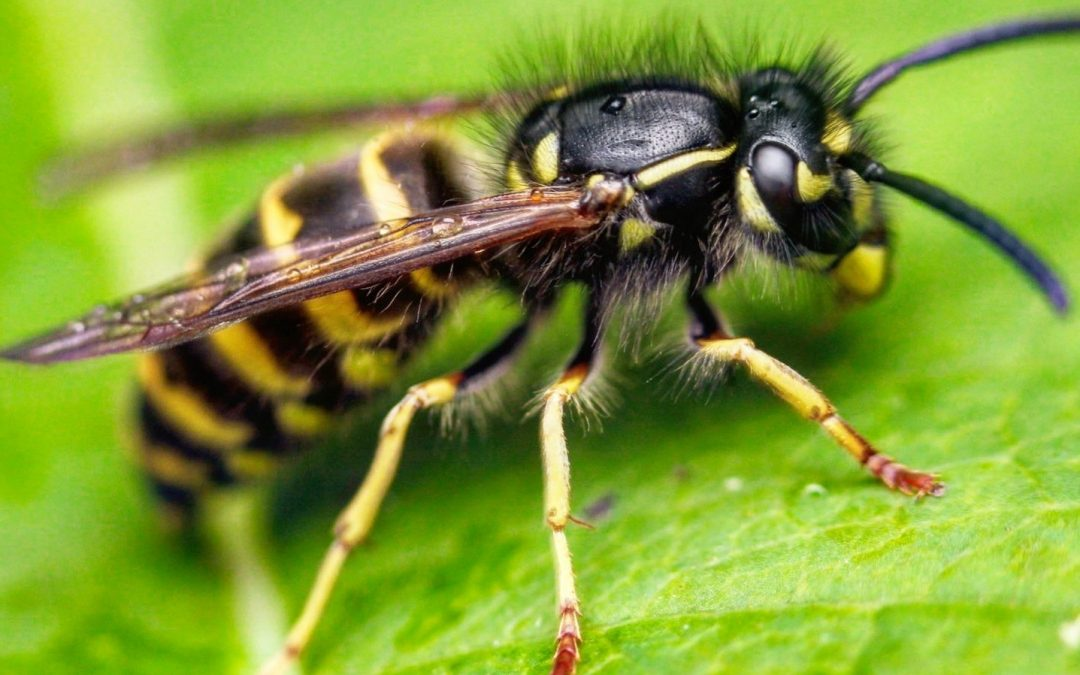 Will Yellow Jackets Attack You At Night?